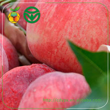 export fresh peach fruits for import and exports company