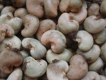 Africa Raw cashew nuts