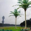 coqueiro tronco das árvores de pintura