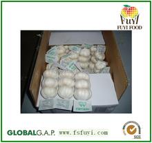 Fresh taste pure white garlic with good quality