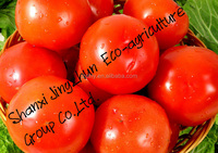 china top quality tomato with good quality and worthy price
