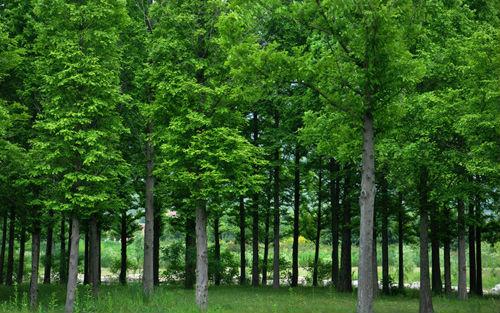 Water retaining Agent, lawn & gardening SAP