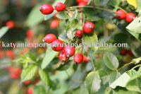 Pure & Natural Rose Hip Seed Oil