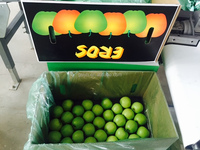 new crop chinese green apple for export