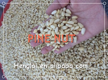 Chinese dry fruit pine nut for sale, pine nuts wholesale