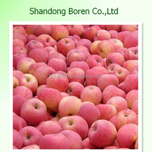 18kg paper carton packing New Crop Fresh Fuji Apple