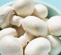 Milky white button mushroom