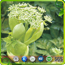 High quality Ashitaba tomorrow leaf P.E/CAS 4431-01-0/Ashitaba Extract Powder