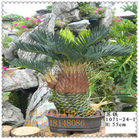 factory price big trunk artificial cycas palm tree bonsai / fake cycas bonsai / artificial plant for sale