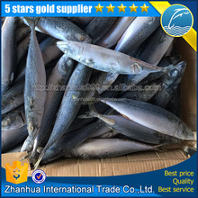 wholesale price high quality frozen pacific mackerel scomber japonicus