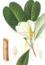 Natural Honokiol CAS:35354-74-6 Comestic ingredients//Magnolia Officinalis Extract/ herbal extract