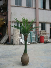 Artificial/fake bottle coconut tree