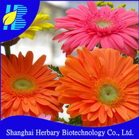 High quality gerbera jamesonii seeds for planting