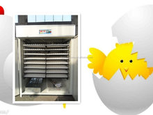 Chicken goose duck turkey egg brooders for poultry for sale