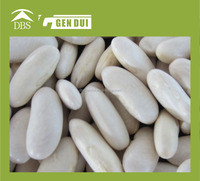 Hot sell bulk Medium white kidney bean