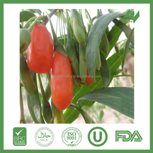 Most popular professional packaged dried goji berry