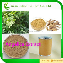 High Ratio angelica sinensis root powder extract/Dang Gui 4:1, 10:1, 20:1
