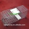 Plateado de jaula de trampa para el gato/conejo/venta al por mayor de ardilla