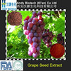 Pure Natural Plant Extract Grape seed P.E. 80% Polyphenols