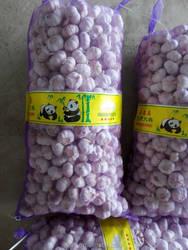 Low Price Nature White Garlic - - Chinese Garlic Fresh Garlic