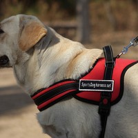 Soft Comfortable Large Harness Dog Pet Chien Pitbulls Sports Harness For Dogs Mascotas Good Quality XXL Dog Harness