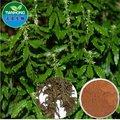 lycopodium serratum extracto en buena calidad