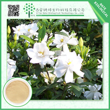 Wholesale Chinese herbal Gardenia Florida Powder Extract 10%-99% Gardenoside