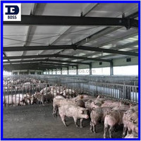 steel structure design poultry farm shed