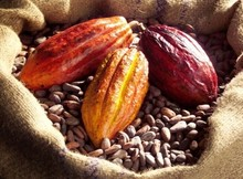 Quality Cocoa Beans