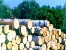 plywoods birch