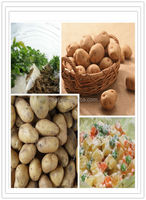New crop cheap and fine fresh potato from China