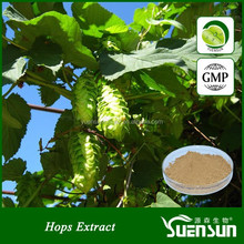 High quality hops flower extract hops extract powder