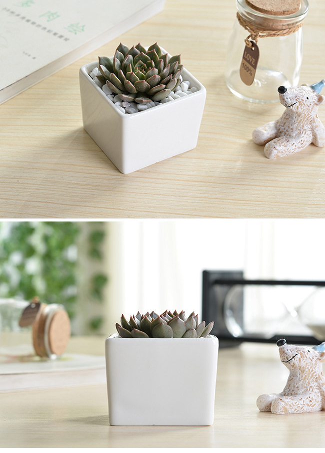 Indoor 3 Inch Small White Ceramic Square Plant Pots View