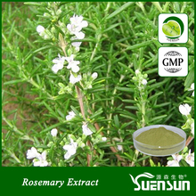 gmp factory pure herbal carnosic acid 30% rosemary extract