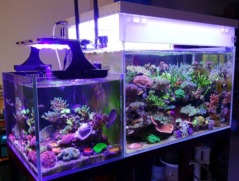 Ctlite High Quality 96inch Led Aquarium Light Sunrise
