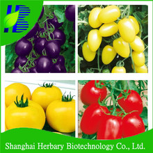 2014 Hot sale purple cherry tomato seed for planting