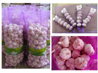 Chinese /China Fresh New Garlic Price of 2014, Red Garlic, Purple Garlic