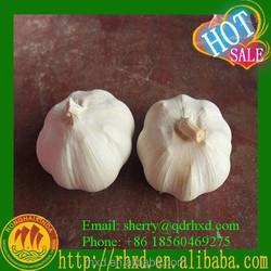 Natural Garlic /Shandong Wholesale Garlic