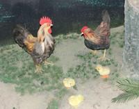 Life Size Chicken Family Simlation Chicken