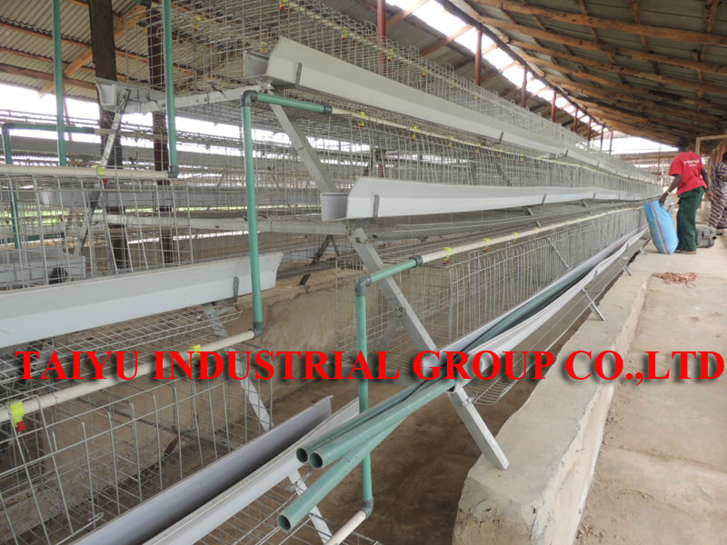 taiyu poultry house design for layers in kenya farm