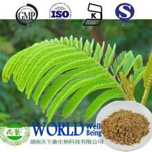 nature 10:1 sensitive plant extract mimose extract powder mimosa powder20:1 Mimosa pudica extract