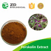 Popular Lose Weight, pure forskolin coleus forskohlii extract