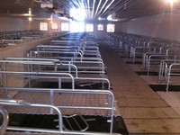 Shandong professional manufacturer Piglet slat flooring for Pig Farm Nursery house