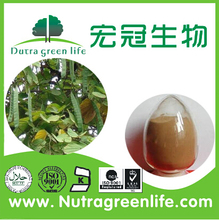 Free sample in bulk cassia nomame powder extract / cassia nomame / cassia nomame powder