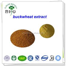 Natural 30% 50% buckwheat seed extract/buckwheat extract quercetin