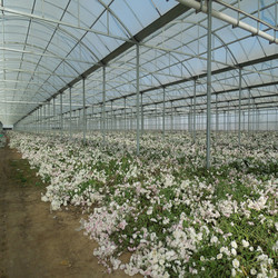 High Quality ISO Bayer polycarbonate hollow sheet polycarbonate panel used greenhouses sale green house greenhouse uv plastic