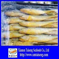 Whole Round Fresh Croaker Seafood Frozen Yellow Croaker fish