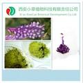 Natural puro alimentación animal polvo, Alfalfa polvo crudo, Alfalfa comida