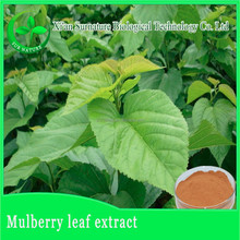 100% pure mulberry leaves powder/mulberry leaf tea powder