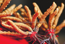 GMP factory supply 100% Natural Organic Cordyceps Extract Powder